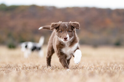 Lynze Puppies 11/4
