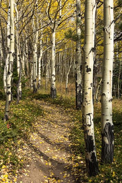 Colorado 240.jpg