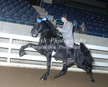 CLASS 28  AGED STALLIONS OPEN SPECIALTY
