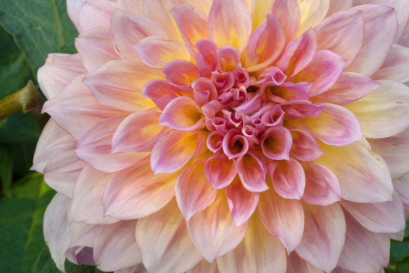 Botanicgarden11 254.jpg