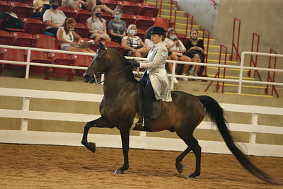 29. Morgan Classic Pleasure Under Saddle