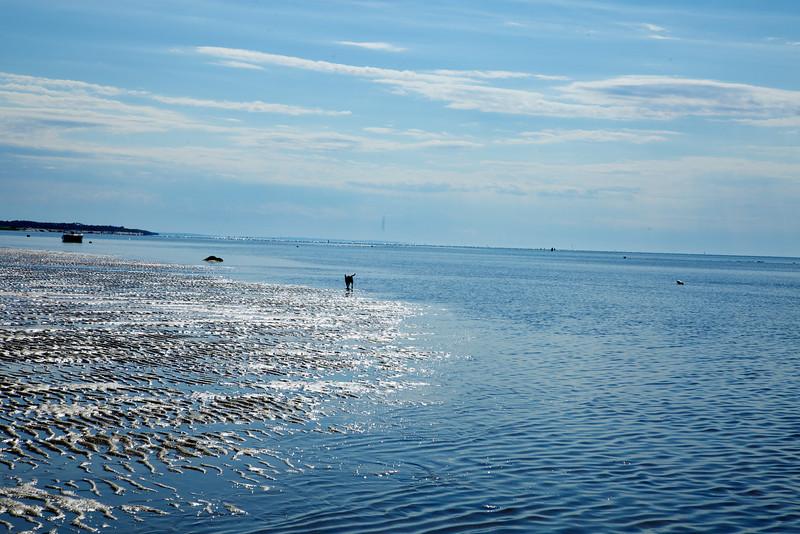 Cape Cod 2011 104.jpg