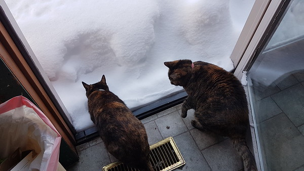 2017-01-17 Snow-Sledding-Cats