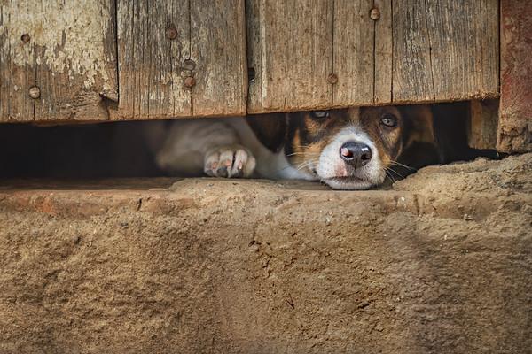 'Remember Me' #CaninesOfCuba     Pat Corlin Photography All Rights Reserved www.PatCorlinPhotography.com  More images of Cuba: http://www.patcorlinphotography.com/Galleries/Travel/Travel-Cuba/  #DogsOfCuba    #Cuba   #Trinidad   #Dog   #LoveCuba       #TGLCuba     #TheGivingLens     #TravelPhotography     #SonyAlpha     #BorrowLenses     #FourLeggedPhotography     #AnimalImagery     #Dogs   #FarmDog    #AnimalPortraits