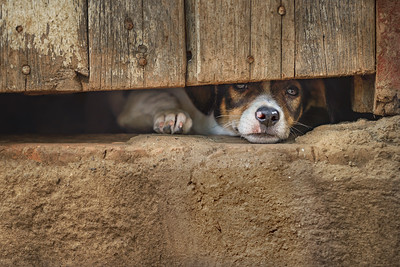 'Remember Me' #CaninesOfCuba     Pat Corlin Photography All Rights Reserved www.PatCorlinPhotography.com  More images of Cuba: http://www.patcorlinphotography.com/Galleries/Travel/Travel-Cuba/  #DogsOfCuba    #Cuba   #Trinidad   #Dog   #LoveCuba       #TGLCuba     #TheGivingLens     #TravelPhotography     #SonyAlpha     #BorrowLenses     #FourLeggedPhotography     #AnimalImagery     #Dogs   #FarmDog    #AnimalPortraits