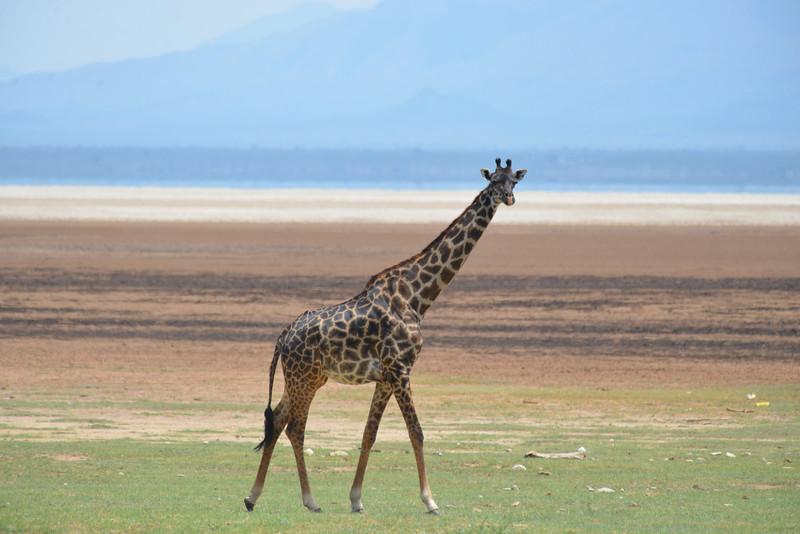 East Africa Safari 463.jpg