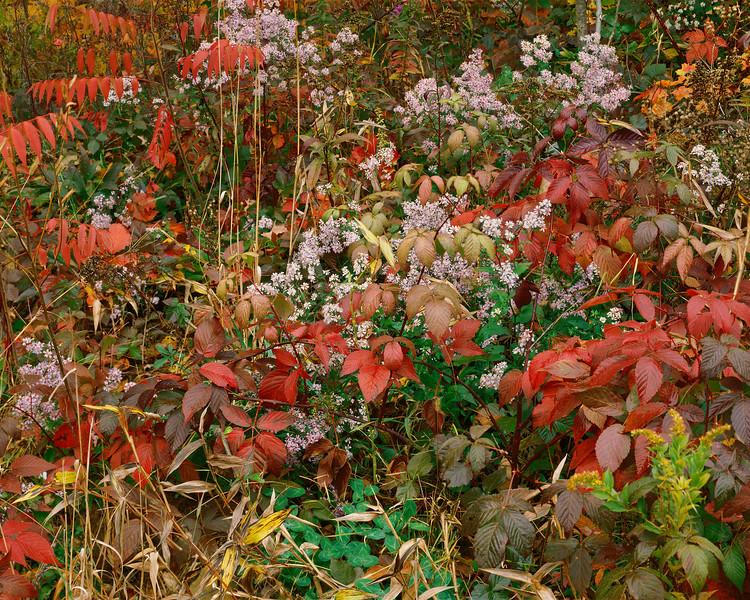 Wild, Leaf & Flower