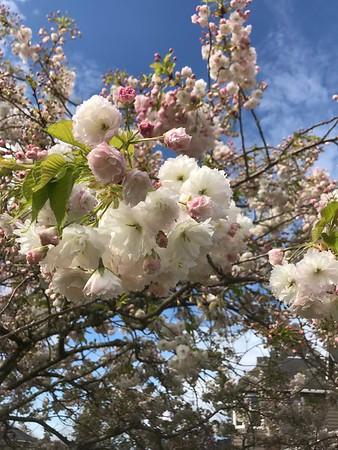Spring Flowers 2019