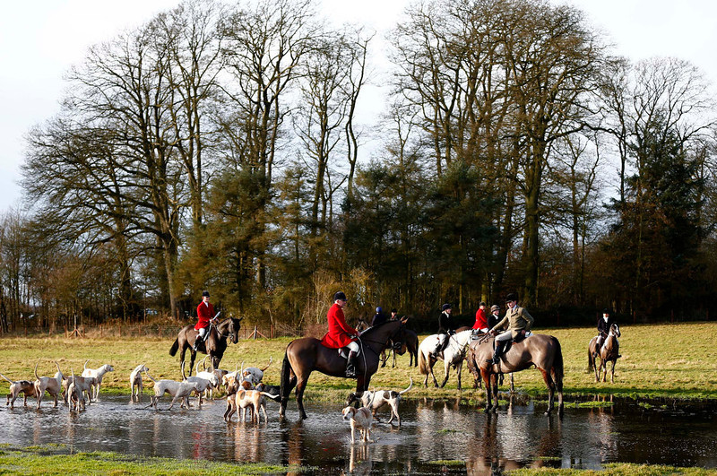 . Members of the Quorn hunt pause in flood water during the traditional Boxing Day meet at Prestwold Hall near Loughborough, central England, December 26, 2012. A ban imposed seven years ago states that foxes can be killed by a bird of prey or shot but not hunted by dogs. Hunts continue nowadays with pursuers accompanying dogs in chasing down a pre-laid scented trail.  REUTERS/Darren Staples