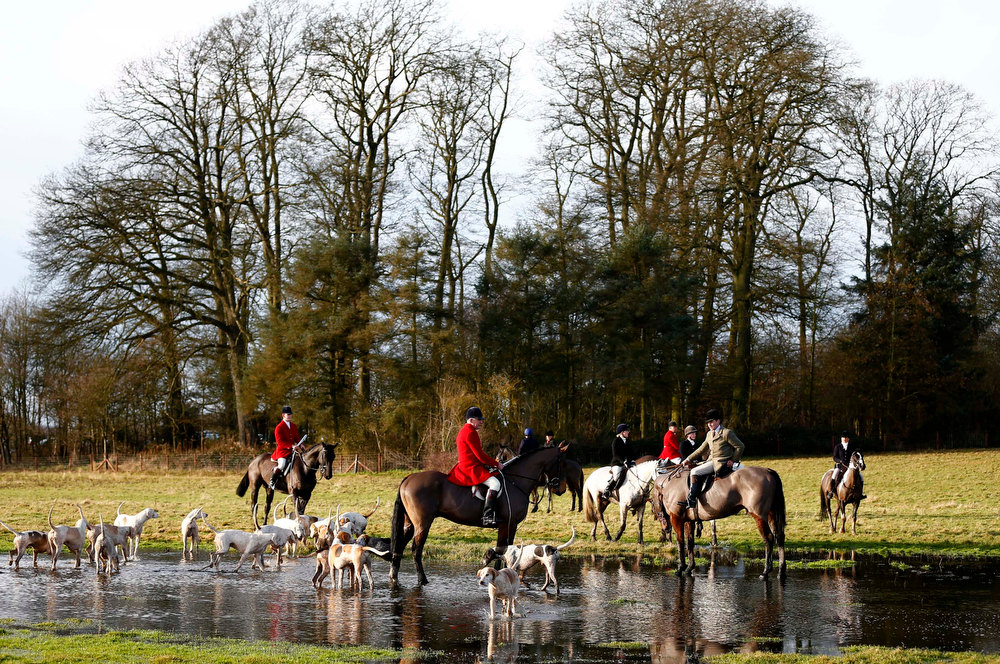 Description of . Members of the Quorn hunt pause in flood water during the traditional Boxing Day meet at Prestwold Hall near Loughborough, central England, December 26, 2012. A ban imposed seven years ago states that foxes can be killed by a bird of prey or shot but not hunted by dogs. Hunts continue nowadays with pursuers accompanying dogs in chasing down a pre-laid scented trail.  REUTERS/Darren Staples