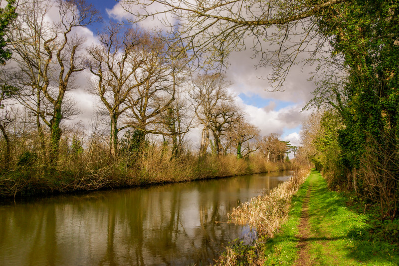 A tree-lined section of the Royal Canal east of Moyvalley