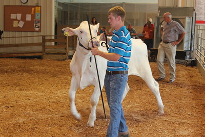 2011 4-H Dairy Beef Show