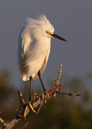 Merritt Island, Vierra Wetlands, Vero Beach, FL