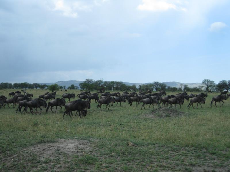 Tanzania14-3619.jpg