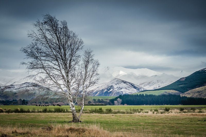lonely-tree-new-zealand.jpg
