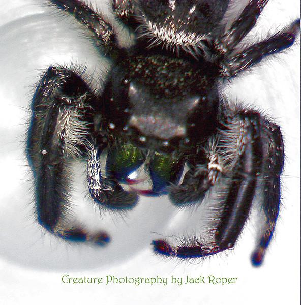 01 Spider .jpg