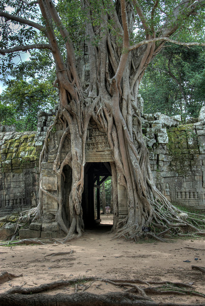 Doorway covered with tree roots at the back of Ta Som