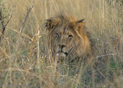 South Africa 2011 mammals