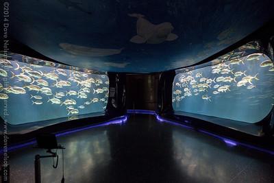 2014 Georgia Aquarium