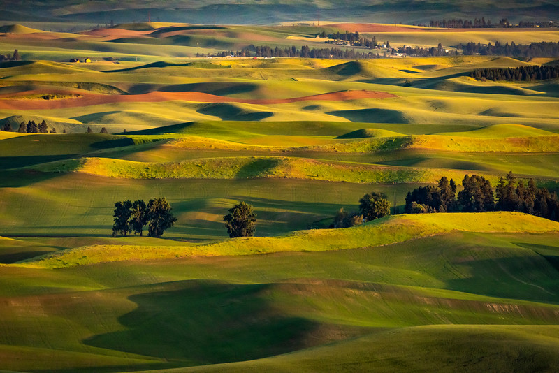 Trees in the Palouse.jpg