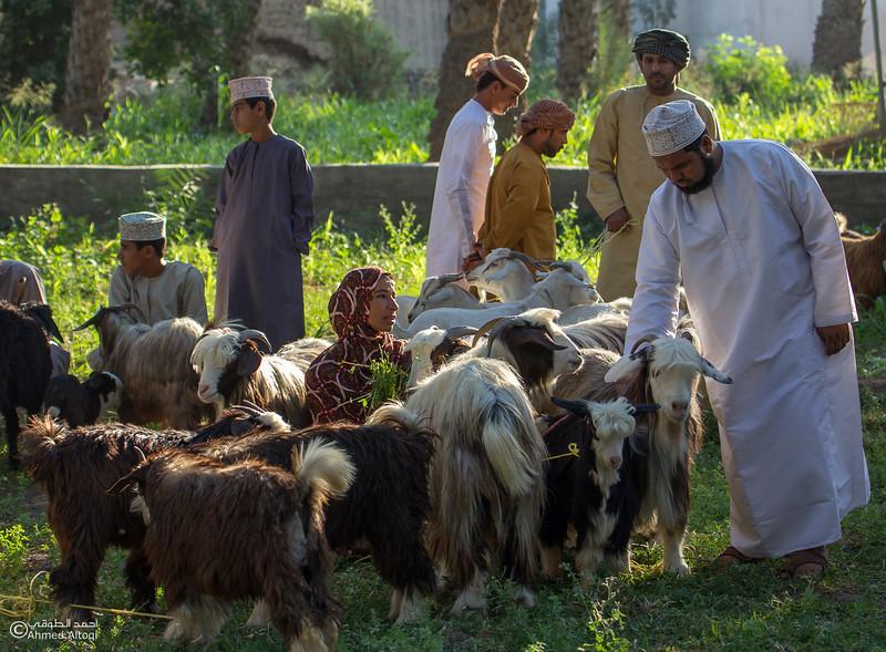 Traditional market (70)- Oman.jpg