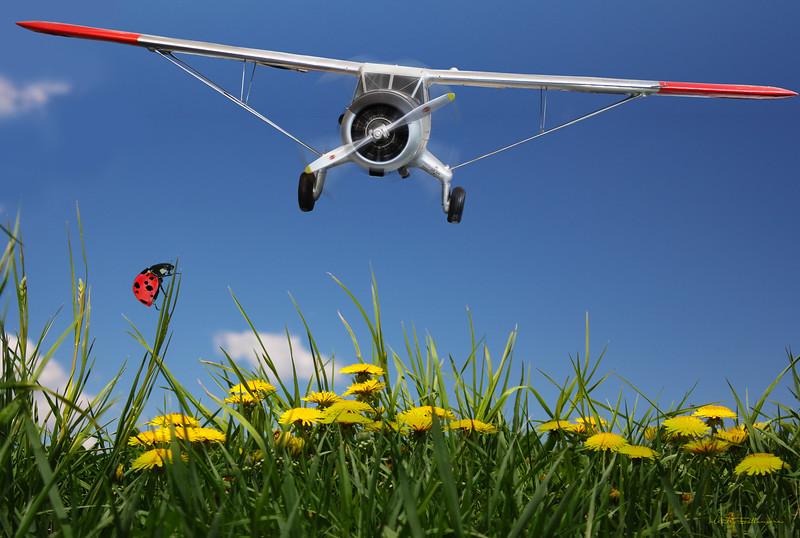 Flyingdandelion.jpg