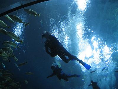 Georgia Aquarium Dive - 2009
