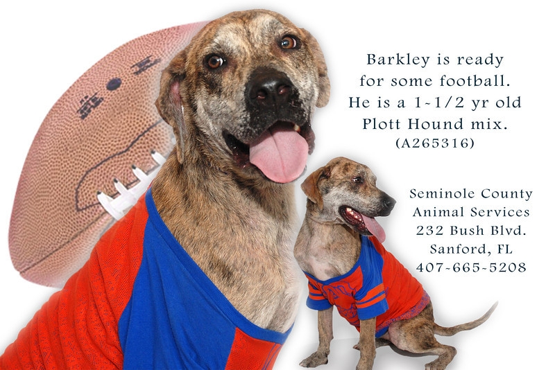 Barkley-A265316-football.jpg