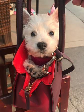 Maisie the Wonder Dog