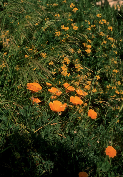 Spring 2020 Roquebrun