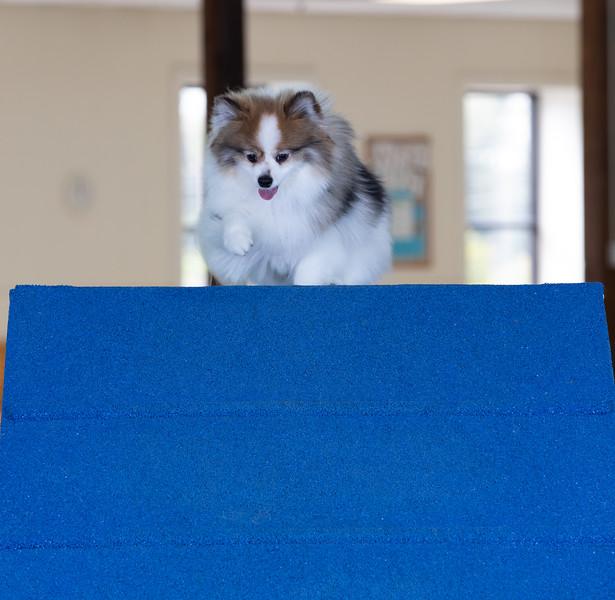 SPCA_Agility-91.jpg