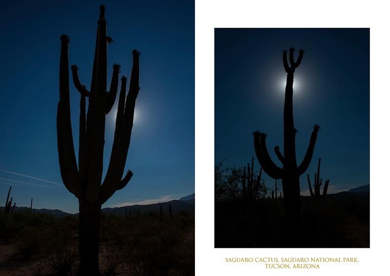 Saguaro silhouettes.jpg