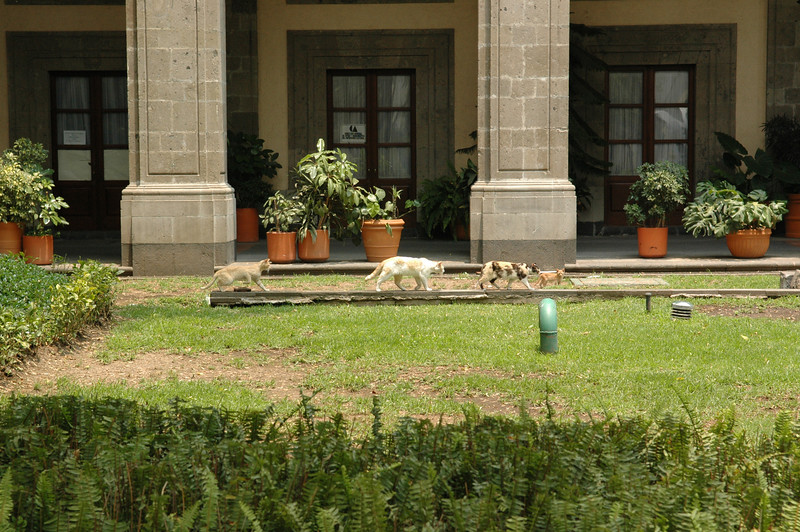 For some reason, there were a bunch of cats hanging out inside the National Palace
