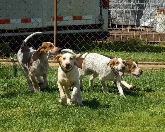 Snickersville Hound pups 3 with John Ryan