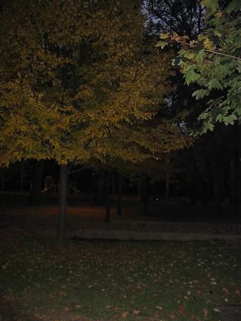 Autumn Foliage 2003