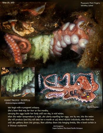 GPO Octopus eggs