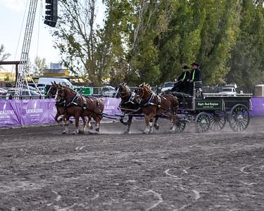 Amateur 4 horse hitch