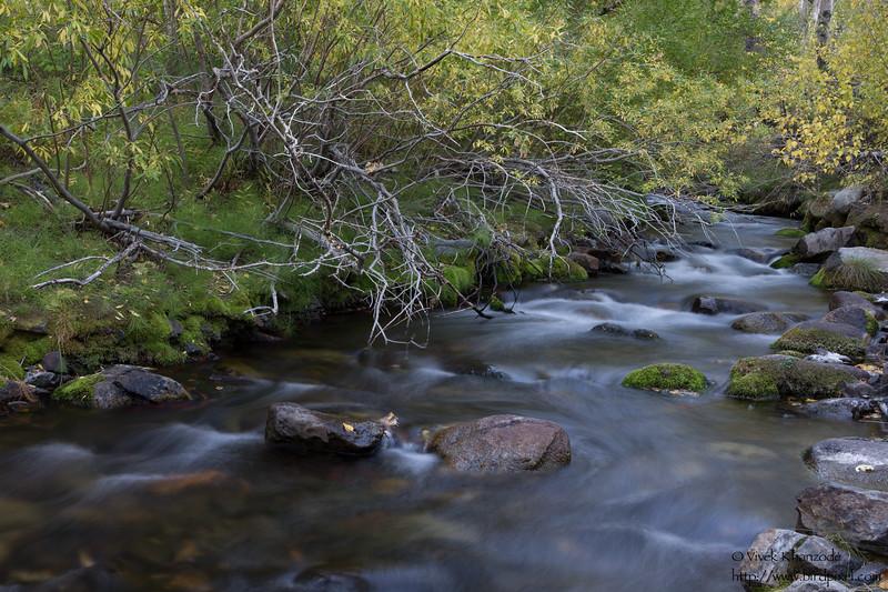 Stream flowing in Aspen Groves - Near Mammoth Lakes, CA, USA