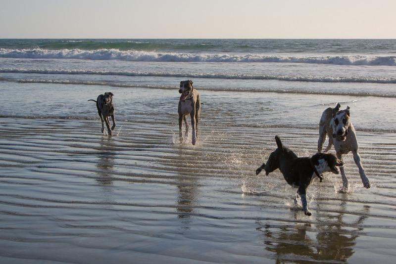 dogs_beach-25.jpg