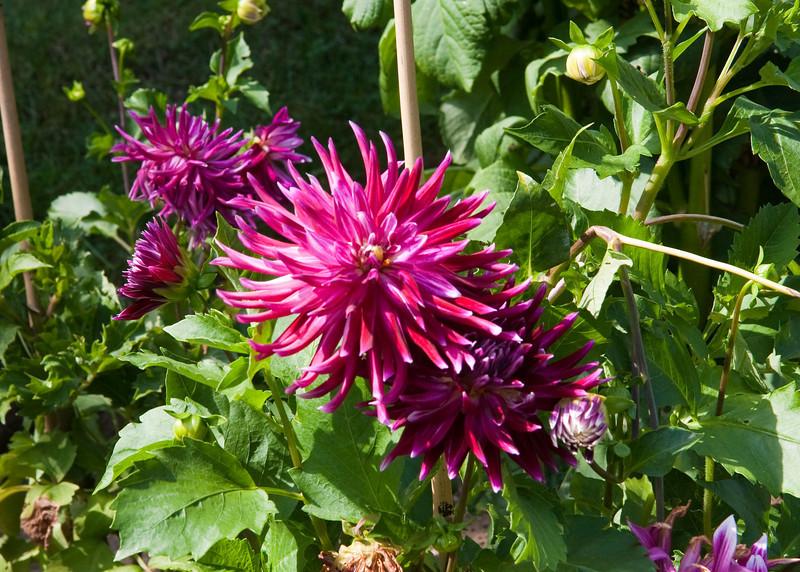 2009 09 06_White Flower Farm_0121_edited-1.jpg