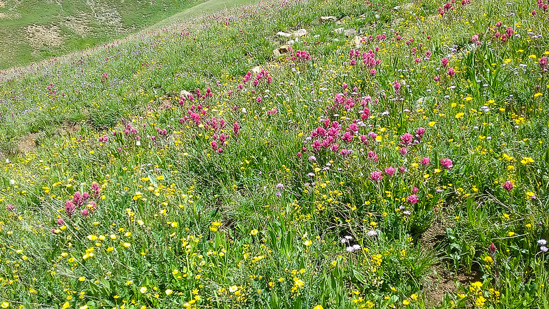 Lots of Indian Paintbrush in that field.