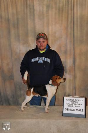 Beagle World Championship