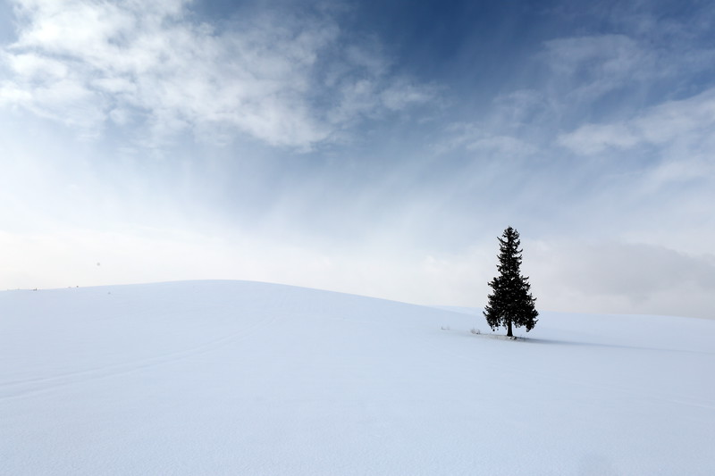 The Lone Pine