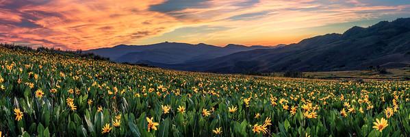 Muddy Creek Wildflowers, Colorado