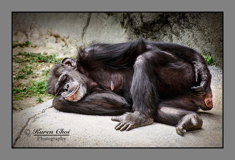 Sleeping Monkey sm.jpg