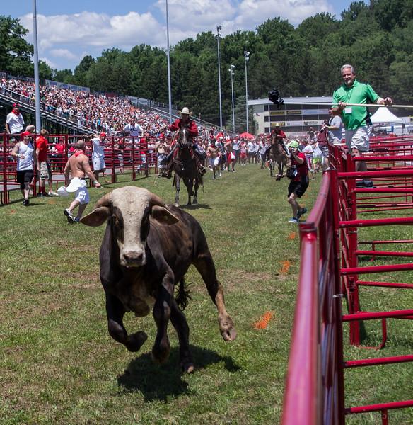 bull-run-8-bobg_11_20141019_2065056334.jpg