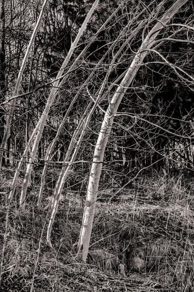 2015-04-14_Sagecrest_Pond_22.jpg