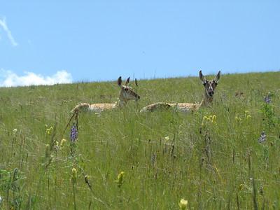 Bison Range June 2010