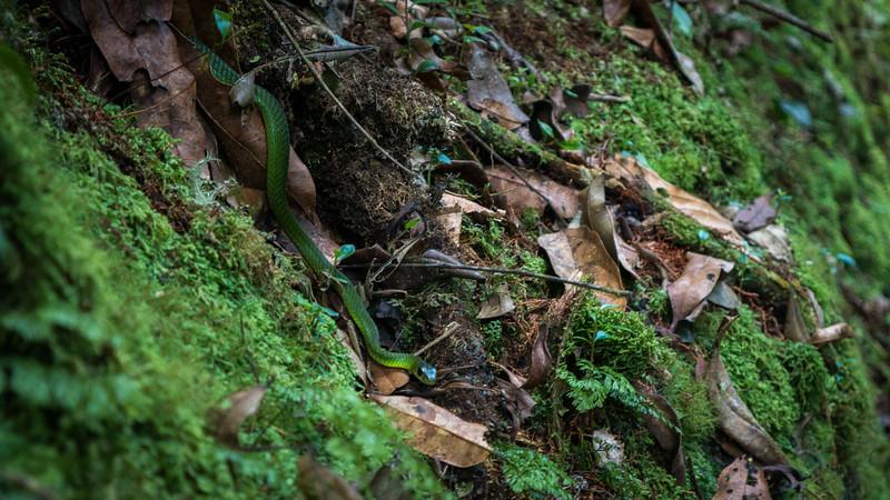 Nyugwe-Rwanda-24.jpg