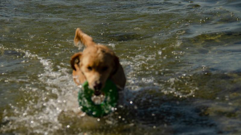 PuppyParty18-621.jpg